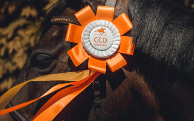 CCD in den Top 10